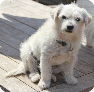 Terrier (Unknown Type, Small) Mix Dog for adoption in Norwalk, Connecticut - Madison - adoption pending