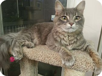 Domestic Mediumhair Cat for adoption in Smyrna, Georgia - Mathilda