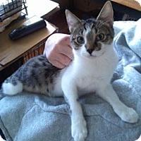 Adopt A Pet :: Cameron - Colorado Springs, CO