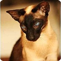 Adopt A Pet :: Ming - Davis, CA