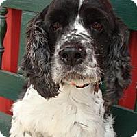 Adopt A Pet :: Foreman - Sugarland, TX