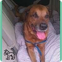 Adopt A Pet :: Chesty - Orlando, FL
