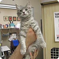 Adopt A Pet :: Merry Winkles - Gilbert, AZ