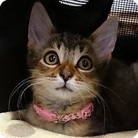 Adopt A Pet :: MUSHROOM - Diamond Bar, CA