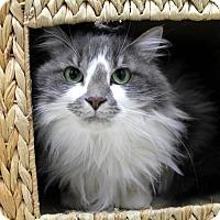 Adopt A Pet :: Macka - Newport Beach, CA