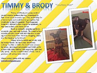 Miniature Pinscher Dog for adoption in Beachwood, Ohio - Brody & Timmy - Courtesy Post