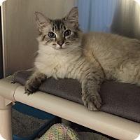 Adopt A Pet :: Solomon - Chesapeake, VA