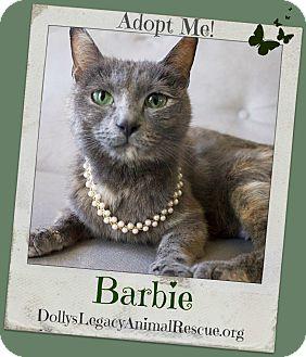 Russian Blue Cat for adoption in Lincoln, Nebraska - BARBIE