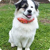 Adopt A Pet :: Bob - Mocksville, NC