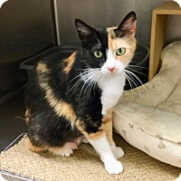 Adopt A Pet :: Audrey - Colmar, PA