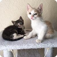 Adopt A Pet :: Sorbet - Mission Viejo, CA