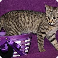 Adopt A Pet :: Scarlett (Updated Photos) - Marietta, OH