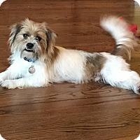 Adopt A Pet :: Chuy - Fort Atkinson, WI