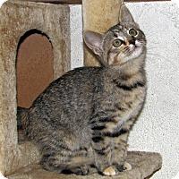 Adopt A Pet :: Crissy - Ruidoso, NM