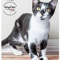 Adopt A Pet :: Indigo - Boca Raton, FL