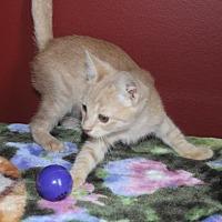 Adopt A Pet :: Dobby (& Viggo) - Herndon, VA