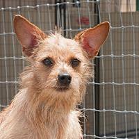 Adopt A Pet :: FONZI - Marble Falls, TX