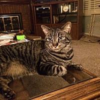 Adopt A Pet :: OSHA - San Diego, CA