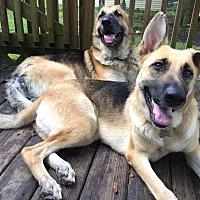 Adopt A Pet :: Diamond - Green Cove Springs, FL
