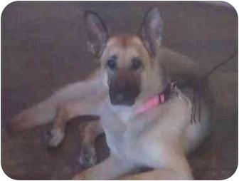 German Shepherd Dog Dog for adoption in Poway, California - MUFFIN
