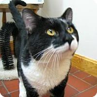 Adopt A Pet :: Jack - Quincy, MA