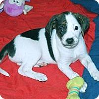 Adopt A Pet :: Candy - Minneola, FL