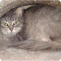 Adopt A Pet :: Sade - Kingston, WA