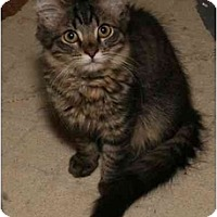 Adopt A Pet :: Beck - Cincinnati, OH