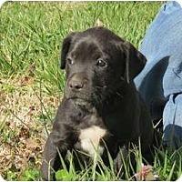 Adopt A Pet :: Sundance - Westbrook, CT