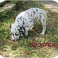 Adopt A Pet :: Booster - League City, TX