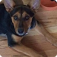 Adopt A Pet :: Cherry - Westminster, CO