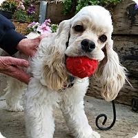 Adopt A Pet :: Casey - La Mirada, CA