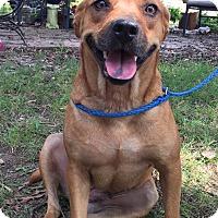 Boxer/Hound (Unknown Type) Mix Dog for adoption in Adamsville, Tennessee - Daphne