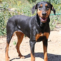 Adopt A Pet :: Angel - Fillmore, CA