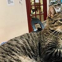 Adopt A Pet :: Bobbie - Whitestone, NY