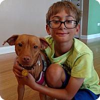 Adopt A Pet :: Hazel - Schaumburg, IL