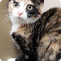 Adopt A Pet :: Glitter - Channahon, IL