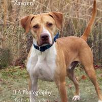 Adopt A Pet :: Zayden - Fond du Lac, WI