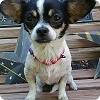 Adopt A Pet :: Rosie - Bridgeton, MO