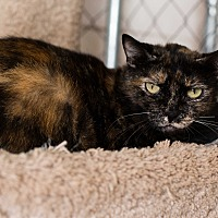 Adopt A Pet :: Ginger - Fallbrook, CA
