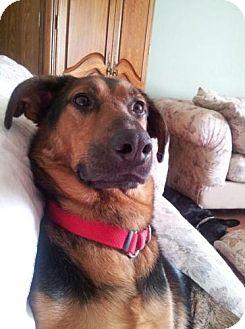 German Shepherd Dog/Anatolian Shepherd Mix Dog for adoption in Crown Point, Indiana - Mack