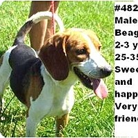 Adopt A Pet :: # 482-11  RESCUED! - Zanesville, OH