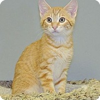 Adopt A Pet :: Duke - Ft. Lauderdale, FL