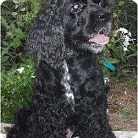 Adopt A Pet :: Helen - Sugarland, TX