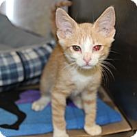 Adopt A Pet :: Jeffrey - Secaucus, NJ