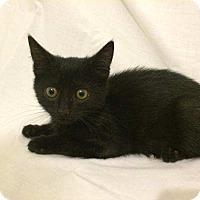 Adopt A Pet :: Cinderella - Modesto, CA