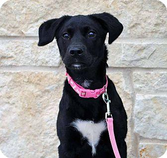 Labrador Retriever Mix Dog for adoption in Weatherford, Texas - Ella