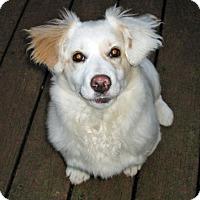 Adopt A Pet :: Poppy - Salem, OR