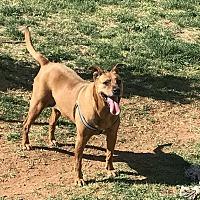 Adopt A Pet :: Gretchen - Denver City, TX