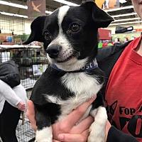 Adopt A Pet :: Jelly Bean - Fresno, CA